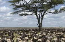 Wildebeest Migration Safari – Serengeti