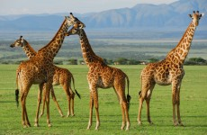 3-Day Tanzania Wilderness Safari