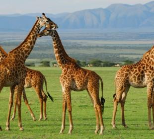 3-Day Tanzania Wilderness Safari