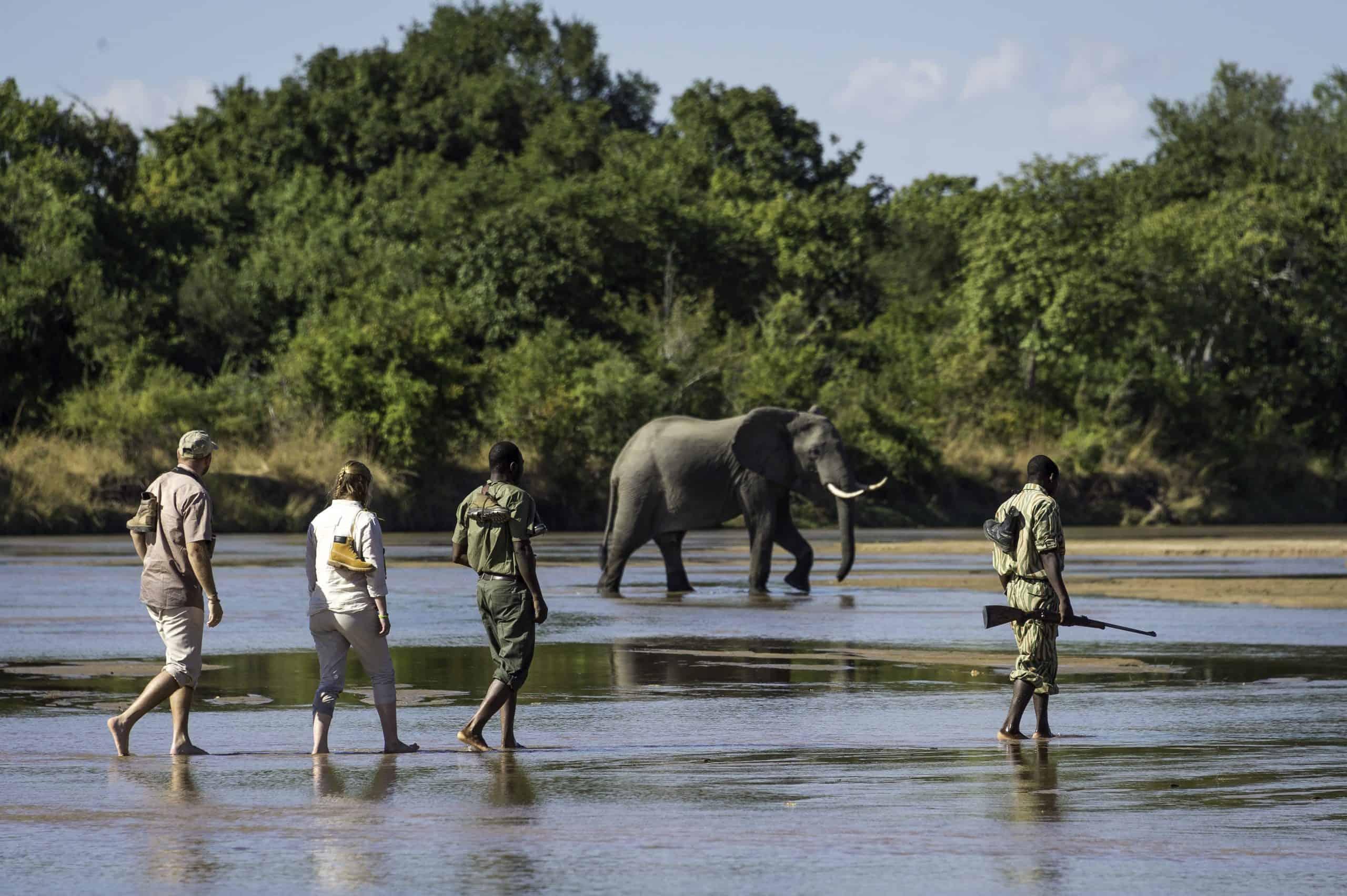South Lunagwa Walking Safari Zambia By Bushcamp Company