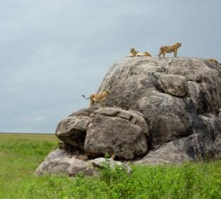 Combined Kenya & Tanzania Safari