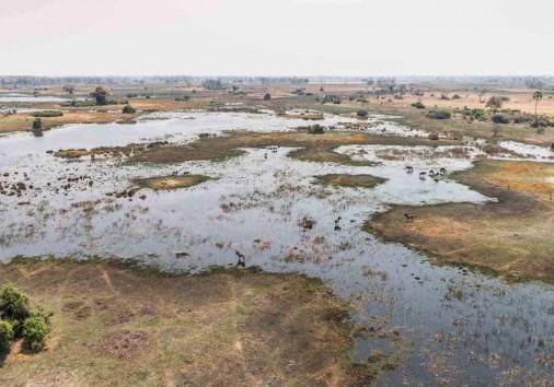 Wildlife In The Okavango Delta