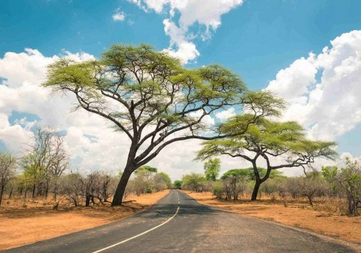 African Landscape With Empty Road And Trees In Zimbabwe On The