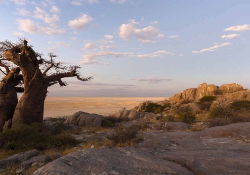 Baobab Tree And Rocks At Late Afternoon Light