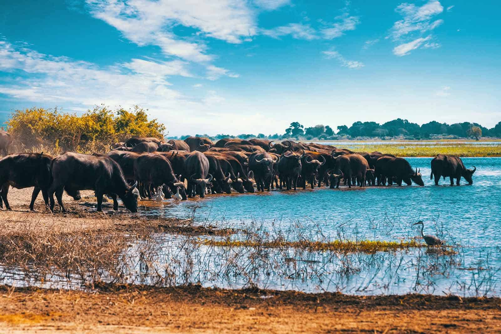 Botswana – Frequently Asked Questions