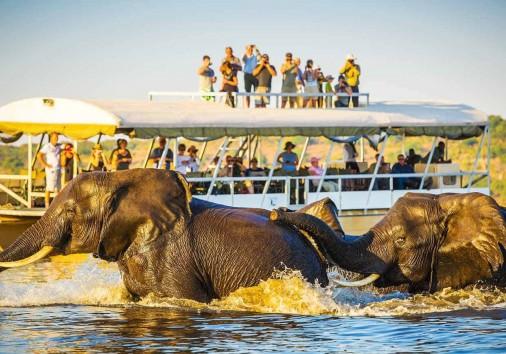 African Elephant Safari