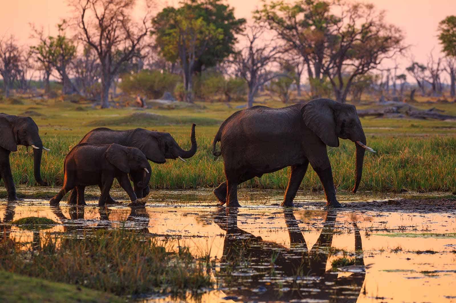 14 Days Okavango Delta, Victoria Falls and Zimbabwe