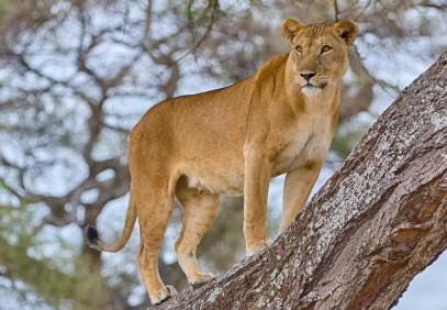 5-Day Serengeti Big Five Safari