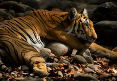 The Land of Trumpets & Roars – Corbett