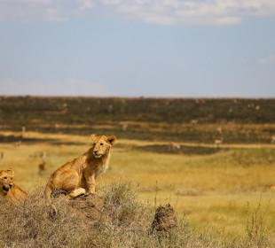 6-Day Best Tanzania Safari
