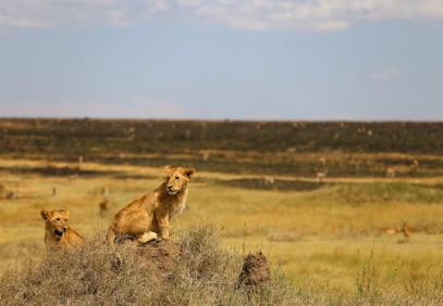 6-Day Best Tanzania Safari