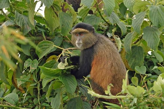 African Jungle Adventures (1)
