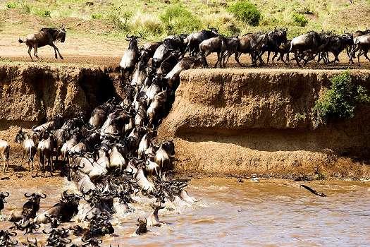 Africanaturaltours Tanzania Safari Arusha (156) Copy