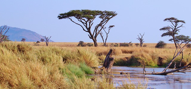 Africanaturaltours Tanzania Safari Arusha (157) Copy