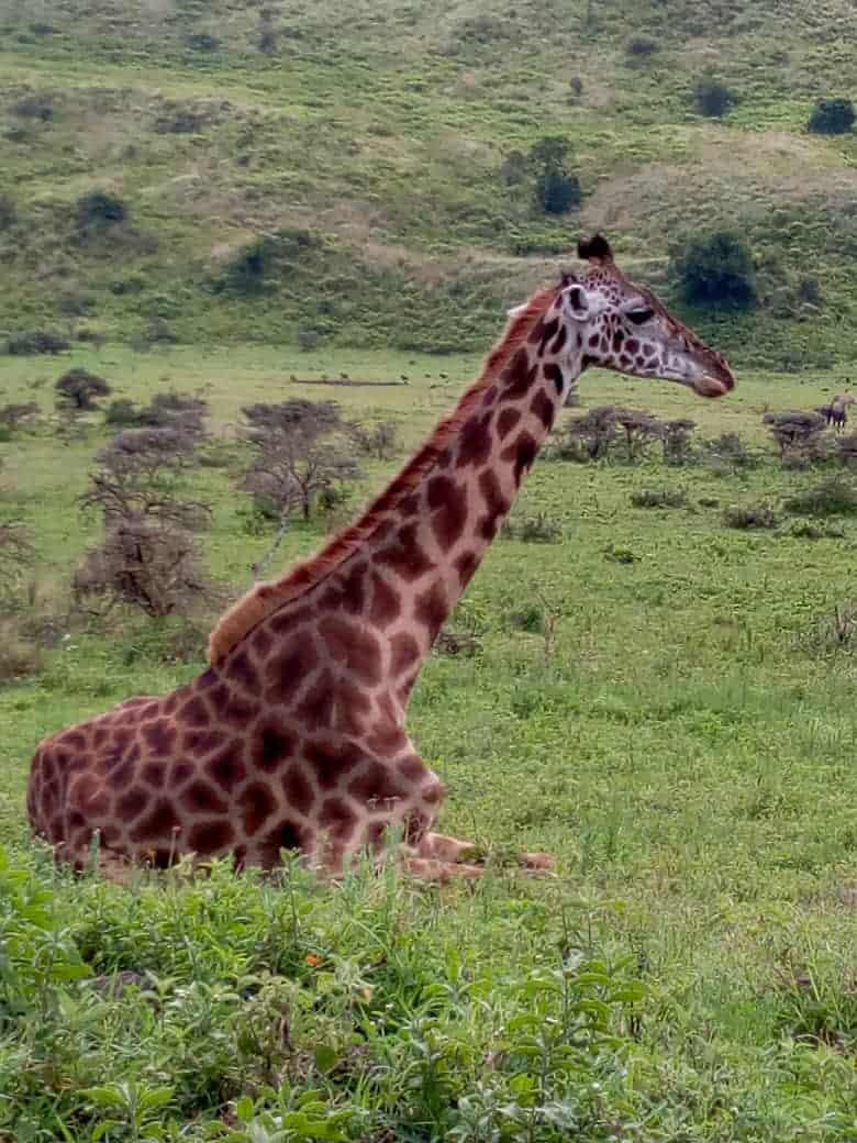 Africanaturaltours Tanzania Safari Arusha (23)