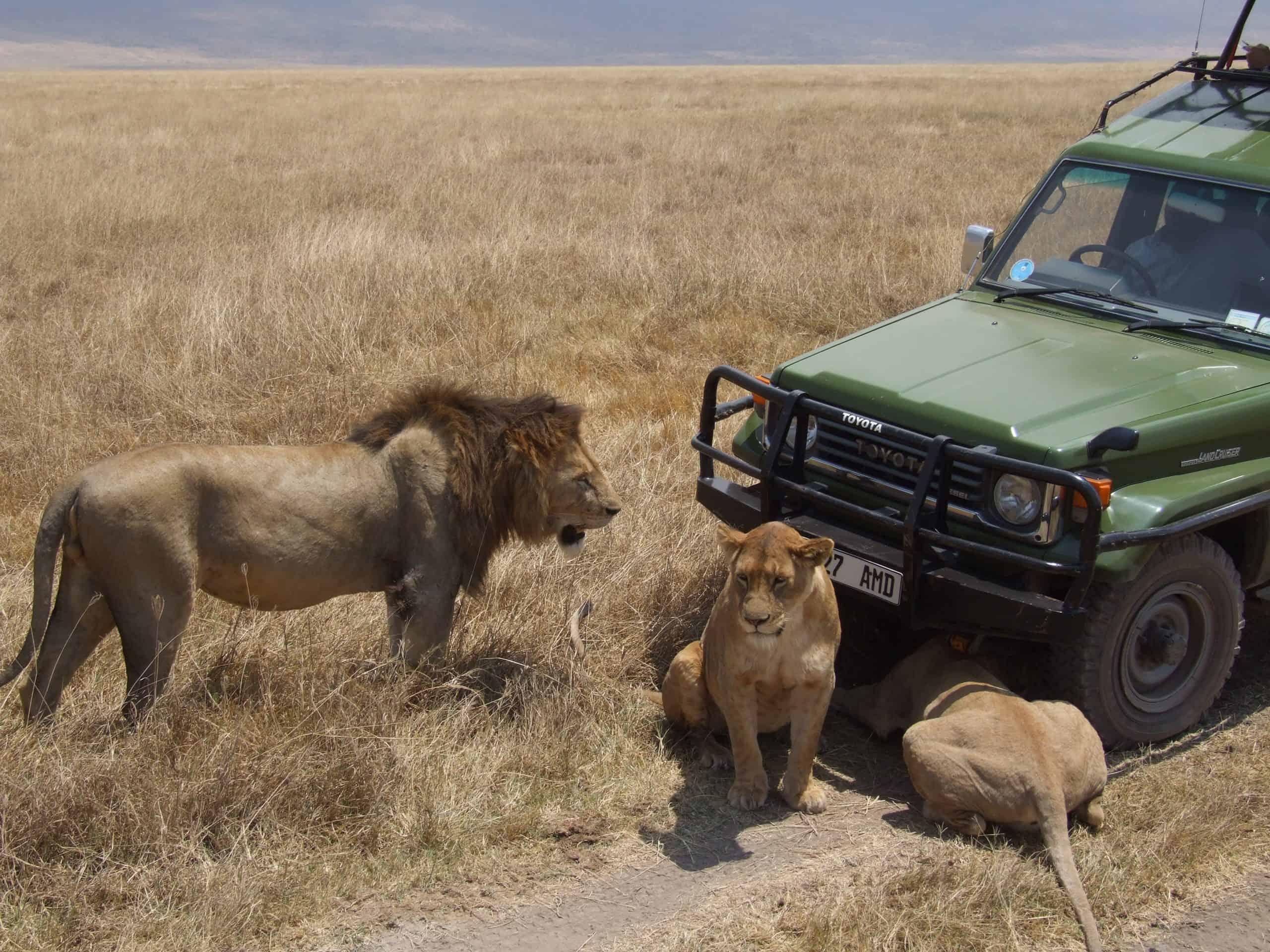 Africanaturaltours Tanzania Safari Arusha (25) Copy