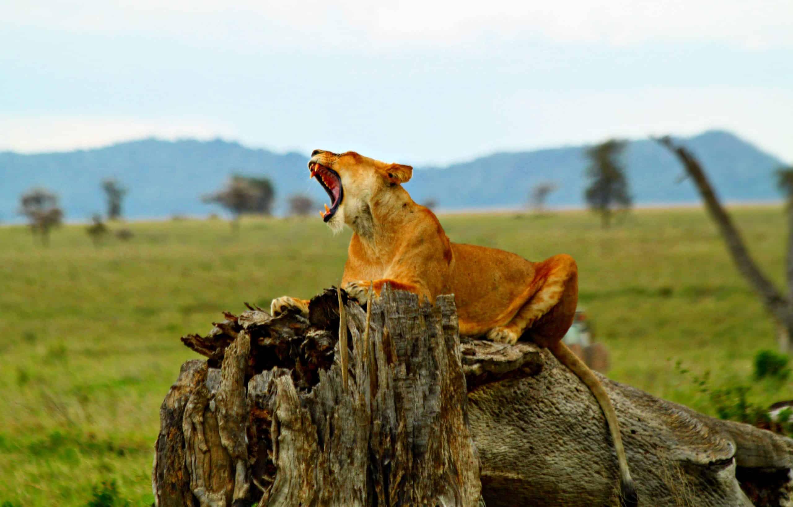Africanaturaltours Tanzania Safari Arusha (26) Copy