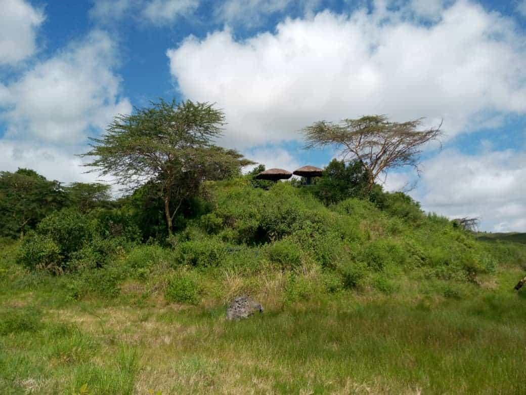 Africanaturaltours Tanzania Safari Arusha (31)
