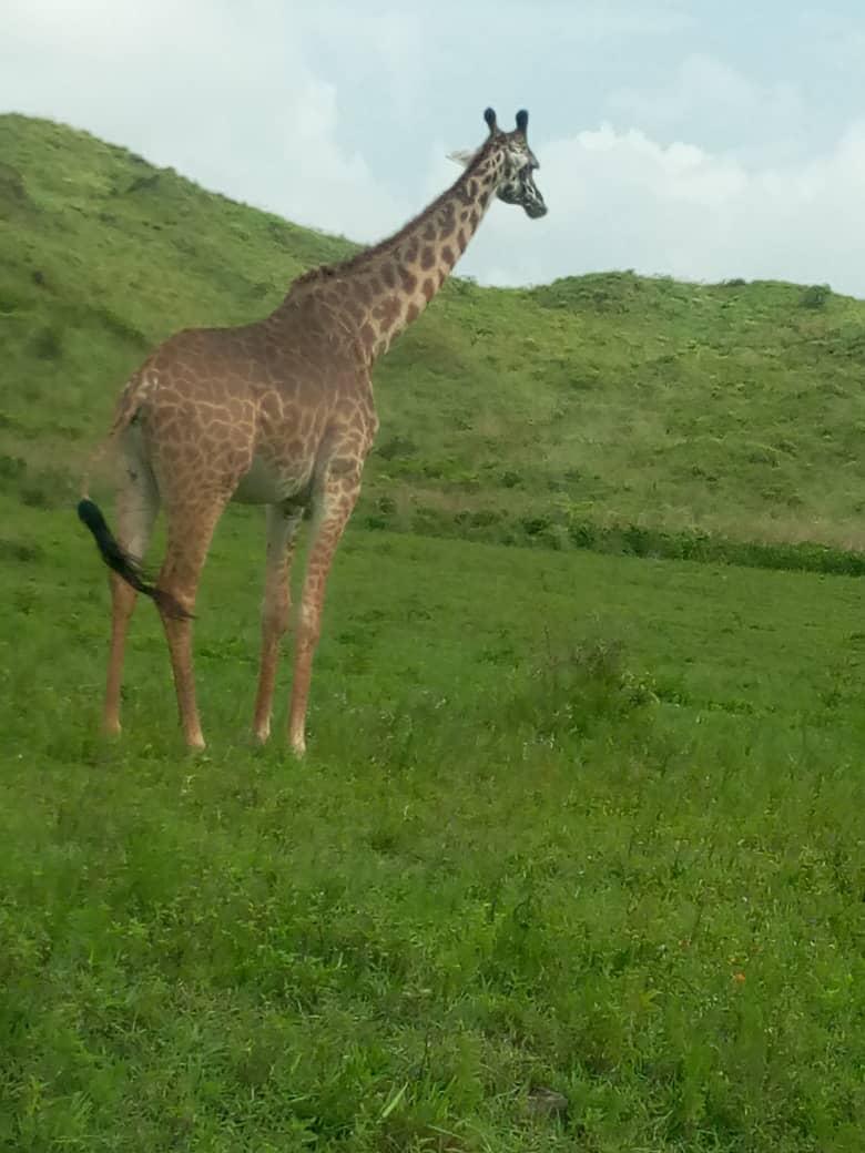 Africanaturaltours Tanzania Safari Arusha (33) Copy