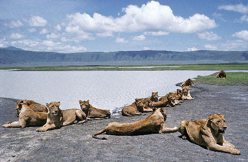 Africanaturaltours Tanzania Safari Arusha (35) Copy