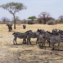 Africanaturaltours Tanzania Safari Arusha (456) Copy
