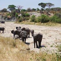 Africanaturaltours Tanzania Safari Arusha (457) Copy