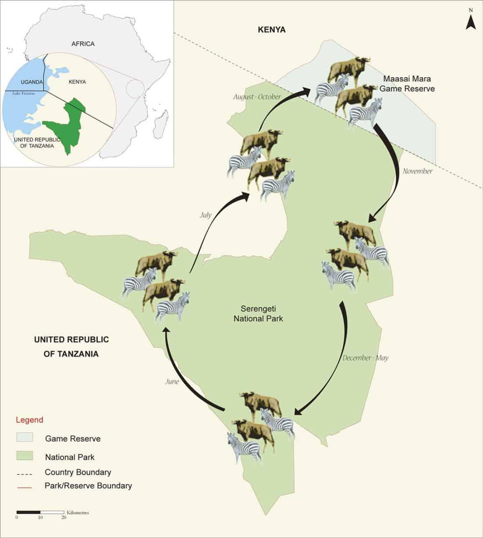 Africanaturaltours Tanzania Safari Arusha (458) Copy