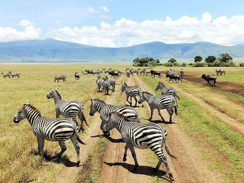 Africanaturaltours Tanzania Safari Arusha (462) Copy