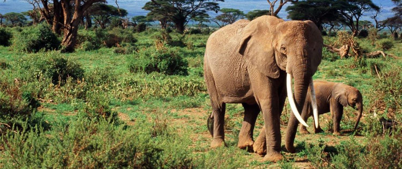 Africanaturaltours Tanzania Safari Arusha (468) Copy