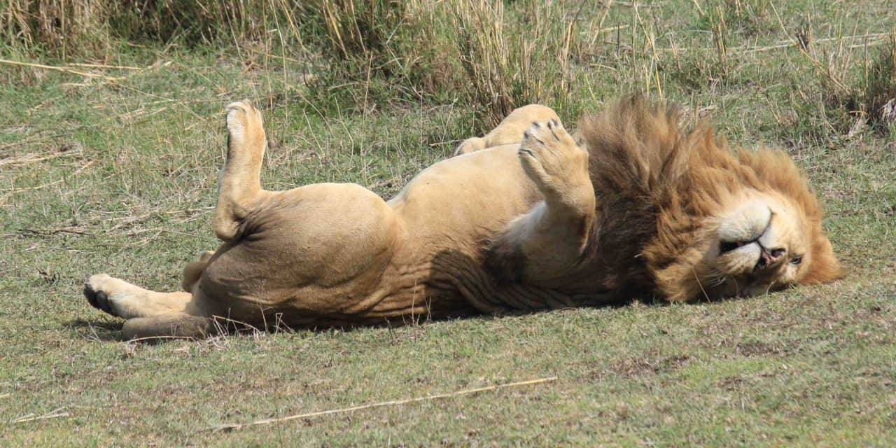 Africanaturaltours Tanzania Safari Arusha (58) Copy