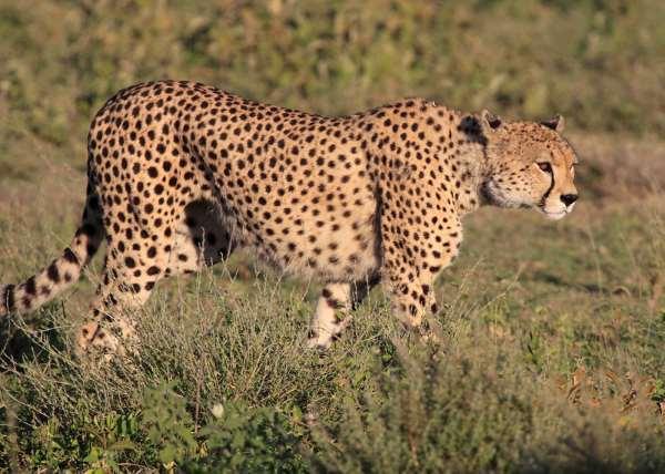 Africanaturaltours Tanzania Safari Arusha (62) Copy