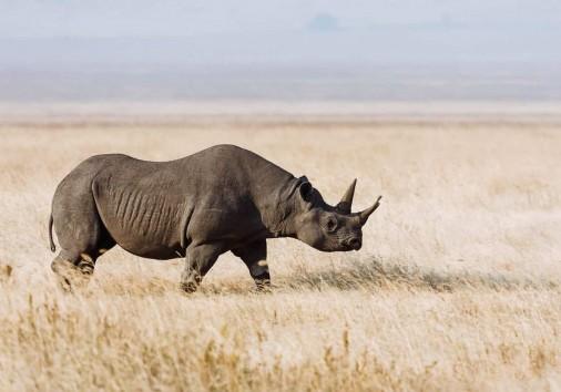 Africanaturaltours Tanzania Safari Arusha (64) Copy