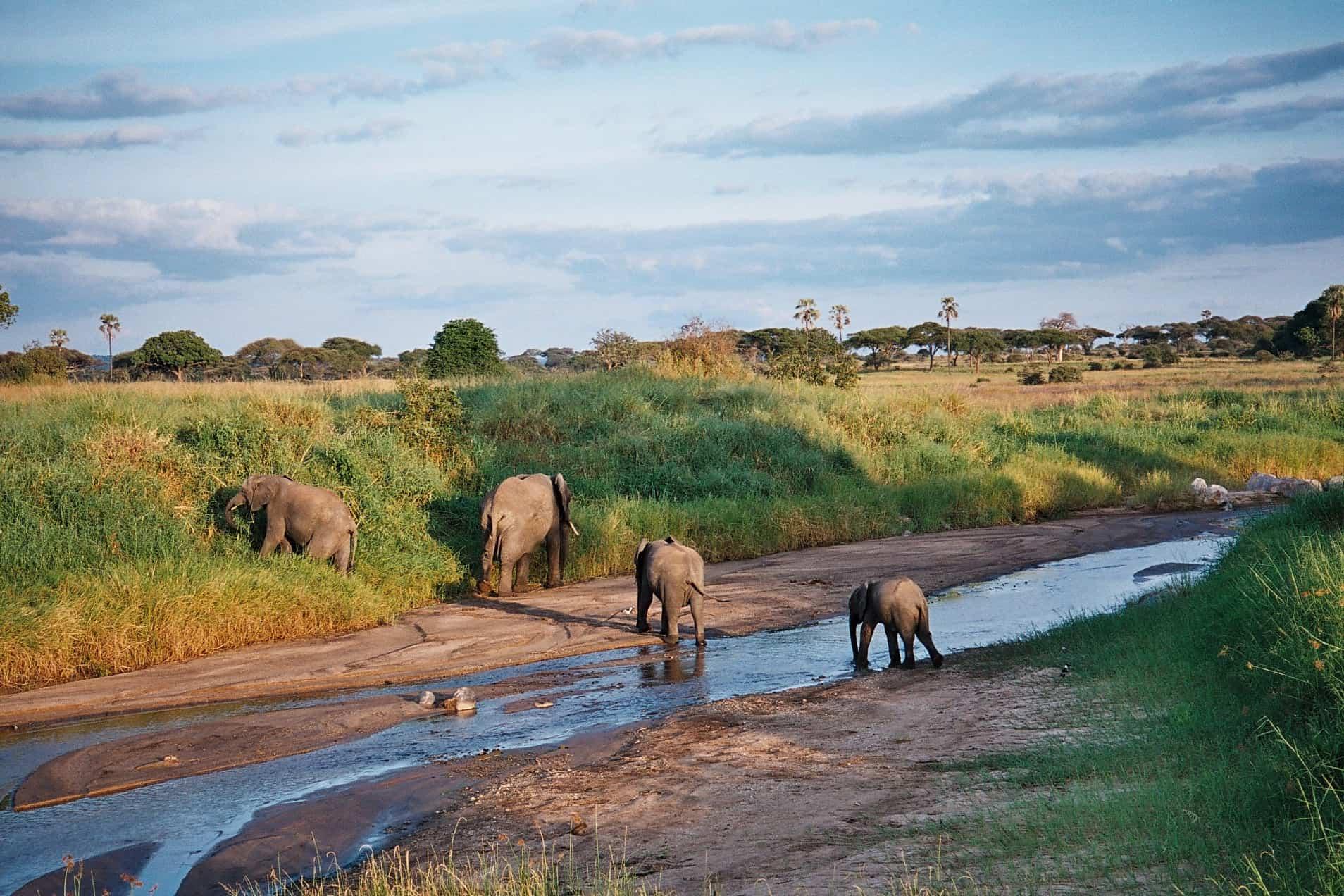 Africanaturaltours Tanzania Safari Arusha (66) Copy