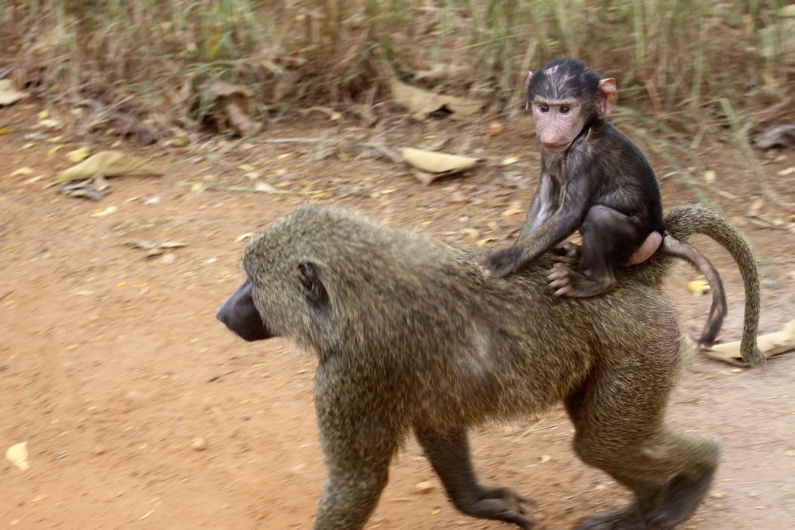 Ghana Wildlife Tours.