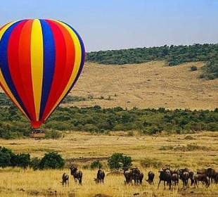 5-Day Maasai Mara, Lake Nakuru, Lake Naivasha Safari