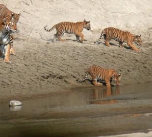 Tiger Safari in Royal Bardia National Park