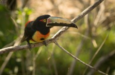 Northern Colombia Birding Trail