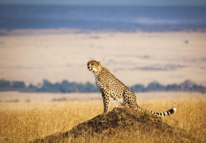 12-Day Kenya Wildlife Photographic Safari