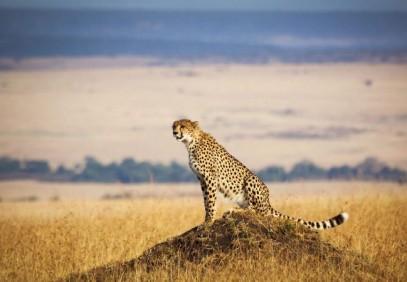 12-Day Kenya Wildlife Photographic Safari