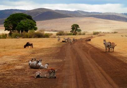 Majestic Tanzania