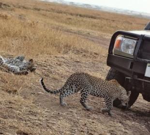 6-Day Tanzania Budget Tented Camp Safari