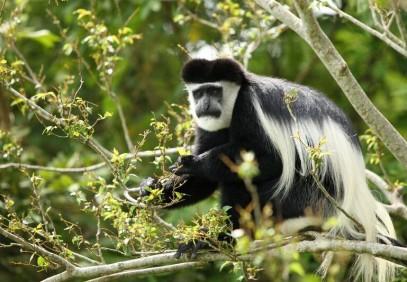 Rwanda Wildlife and Gorilla Safari