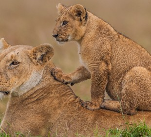 Classic Best Adventures in Kenya and Tanzania