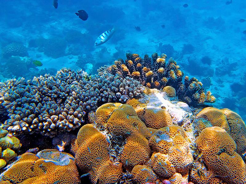 Coral Reefs 800x600