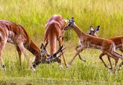 1 Day Akagera National Park Safari