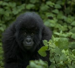 4 Days Rwanda Gorilla Safari & Lake Kivu Splash