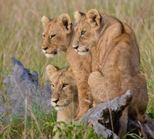 4-Day Safari to Manyara, Ngorongoro and Serengeti