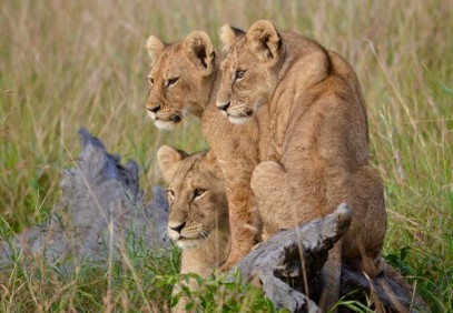 4-Day Safari to Manyara, Ngorongoro and Serengeti