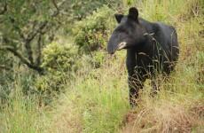 Trek Tapir