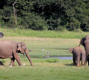 7 Day Chief's Island & Chobe National Park Family Safari